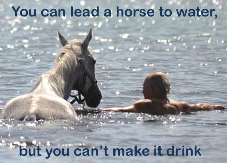 you can lead horse water make drink